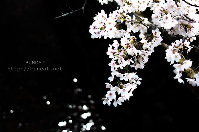 IMGP0433_R