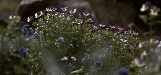 春の花壇も終わり 2015