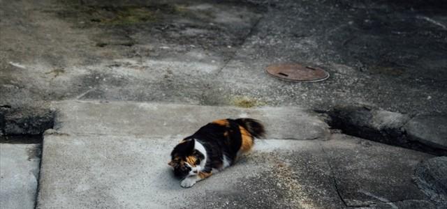 地球の音を聴く猫さん