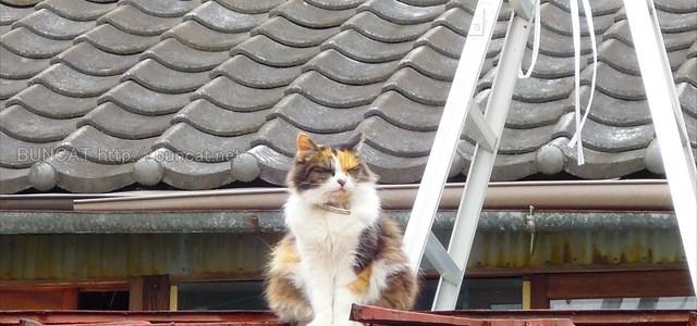 赤いトタン屋根の猫