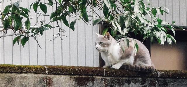 灰白氏の冷ややかな一瞥。猫彼女には甘いのに。