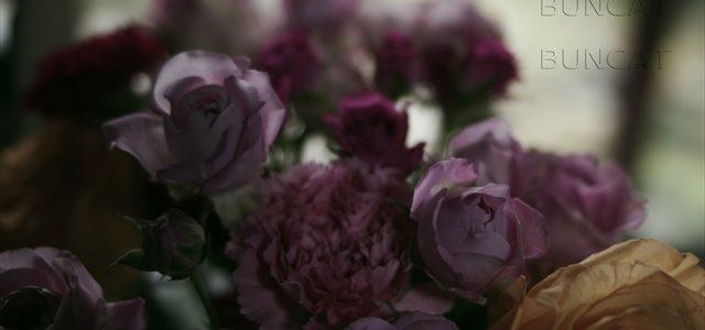 薔薇を明暗わけて撮ってみる