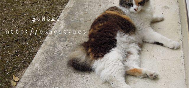猫の機嫌の変動は、山の天候より急激