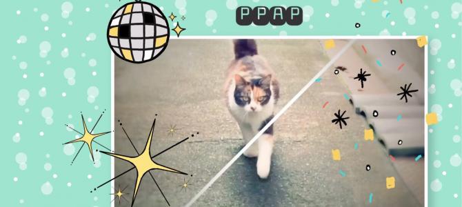 【猫動画】PPAP ミケちゃん