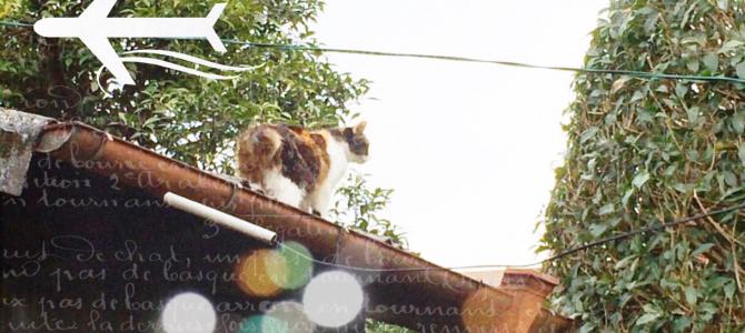 【猫動画】くるくるスピンしっぽ