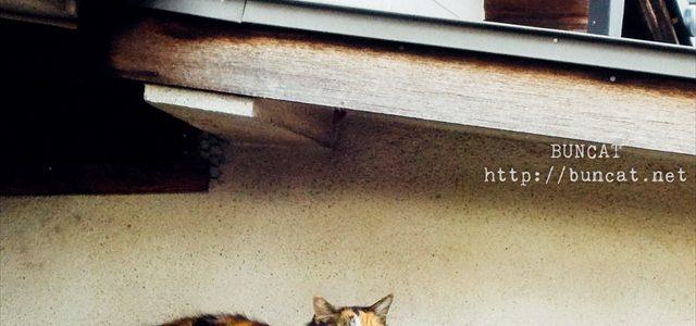 猫篇「兵どもが夢の跡」