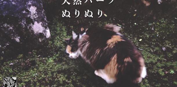 天然ハーブと猫さん