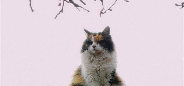 猫は近視なのか?