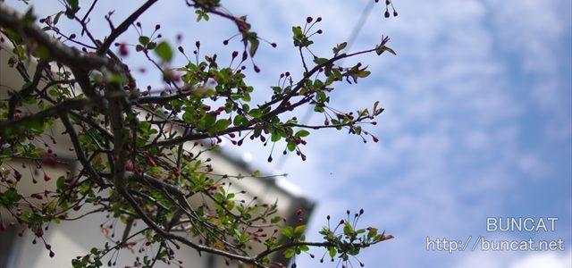 春まだ浅し蕾ちゃん