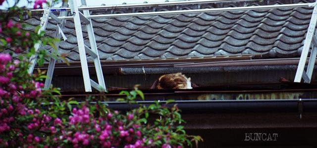 花より睡眠の猫