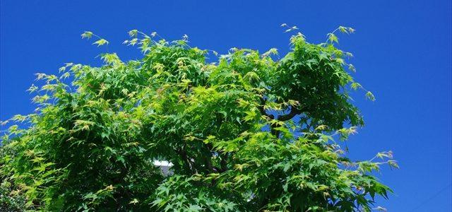 新緑の季節となりました(時候の挨拶的な)