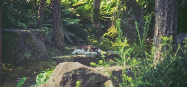 眠りの森の美女 / 三毛猫編