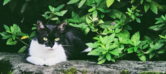 黒白猫さんの休憩室