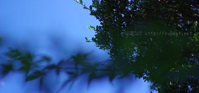 秋と夏を天と地で撮る