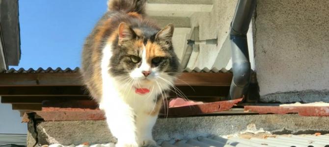 挨拶に降りてきてくれる三毛猫さん