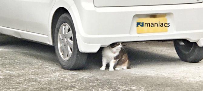 猫の自動車整備について